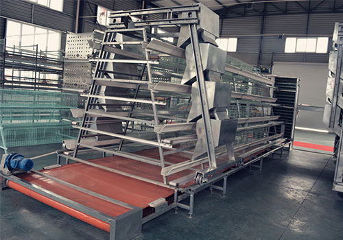 A whole set of our chicken cage and automatic manure removal system